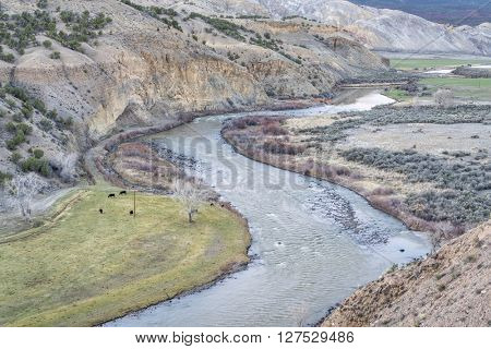 valley of the upper Colorado RIver above Dotsero, Colorado, springtime scenery with a cattle on pasture