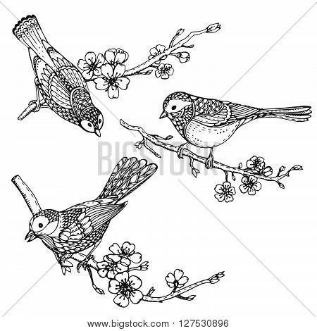 Set Of Hand Drawn Ornate Birds On Sakura Flower Branches.