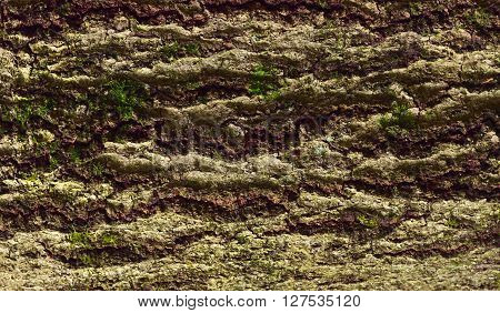 Beech bark with moss and lichen forest by Beckingen Saarland - Germany