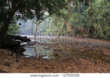 View of tropical Rainforest Landscape in Pahang, Malaysia
