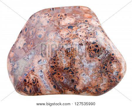Polished Pebble Of Leopard Skin Jasper Isolated