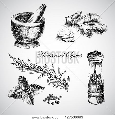 vector hand drawn herbs and spices - ginger, pepper, mint. sketch designer element collection