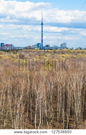 Birch Grove And City With Tv Tower On Horizon