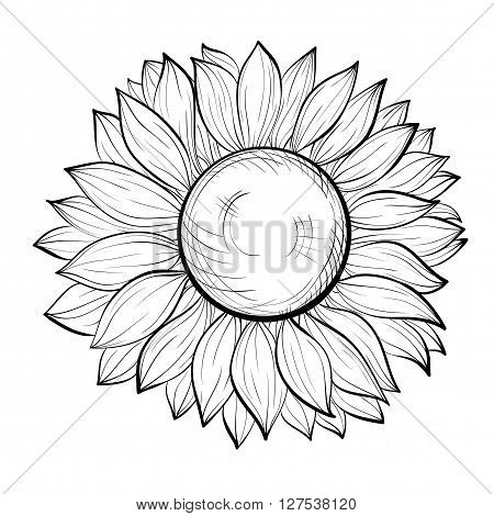 beautiful black and white sunflower isolated on white background. Hand-drawn contour lines and strokes. Perfect for background greeting cards and invitations to the day of the wedding birthday and Valentine's Day