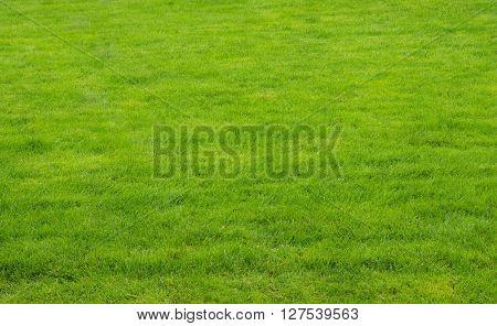 Green texture of grass is in a garden