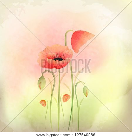 Springtime Watercolor Poppy Flower on Colorful Background