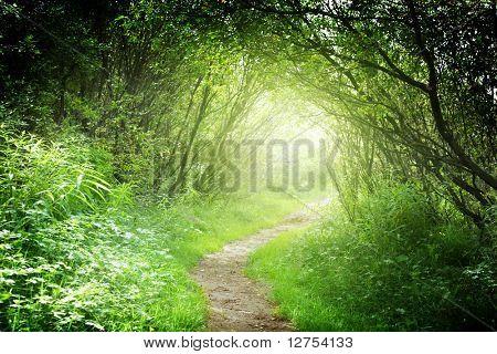 Weg in deep Forest
