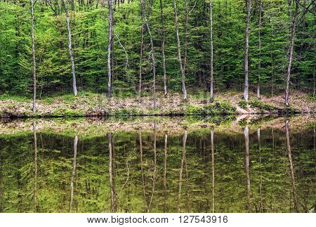 Green forest is reflected in water. Seasonal natural scene. Wildlife theme. Reflecting greenery. Greenery and lake.
