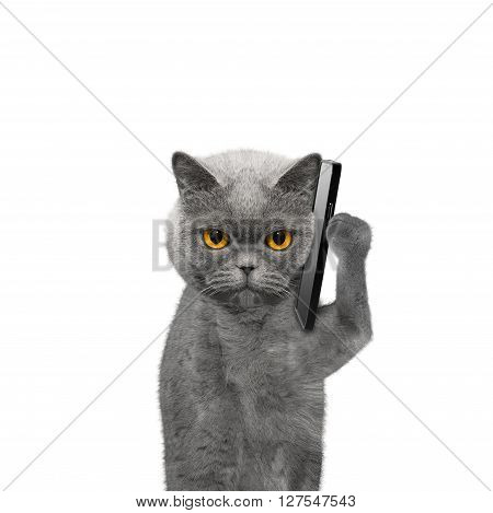 cat is talking over the mobile phone -- isolated on white