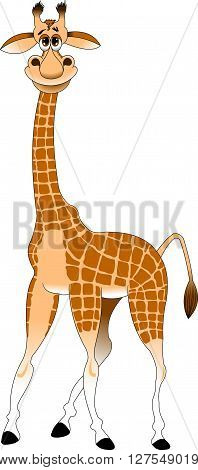 cheerful yellow giraffe on a white background vector and illustration
