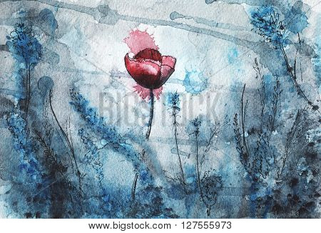 beautiful floral watercolor illustration. red poppy flower