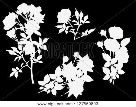 illustration with white roses isolated on black background