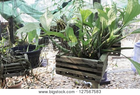 orchid in a nursery orchid, farm, plant, nature, green, spring, floral