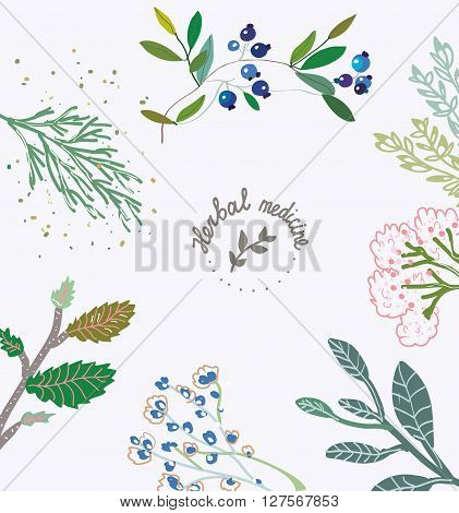 Herbal background for the organic medicine. Vector illlustration with hand drawn design and frame.