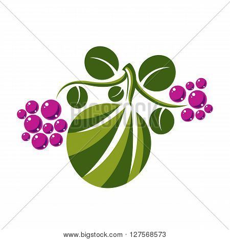 Vector flat green leaf with tendrils and purple seeds. Herbal and botany symbol isolated on white background spring season natural icon. Harvest idea design element.