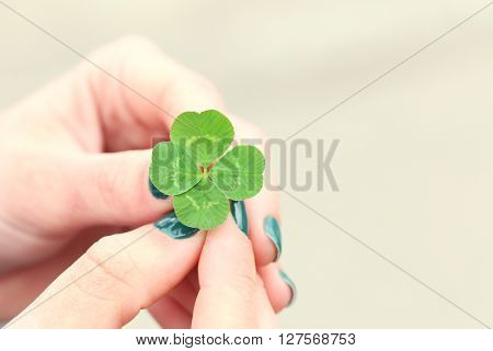 Four leaf clover in female hands closeup