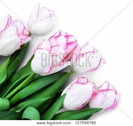 Bouquet of fresh tulips on a light background, isolated on white