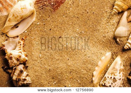 Close up view of the shell on sand