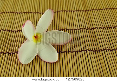 Plumeria Close Up Isolated On White Background