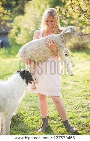 Woman holding lamb. Dog walking around.