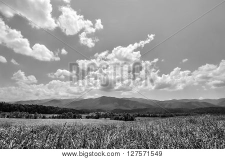 Black and white grassland landscape at Cades Cove Valley in Tennessee