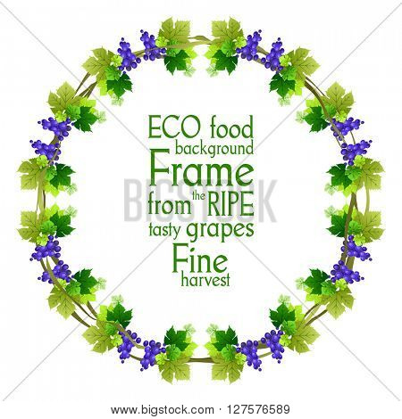 Ripe blue grape frame.  The natural design for banner, ticket, leaflet, invitation and so on. Place for text. Isolated elements.