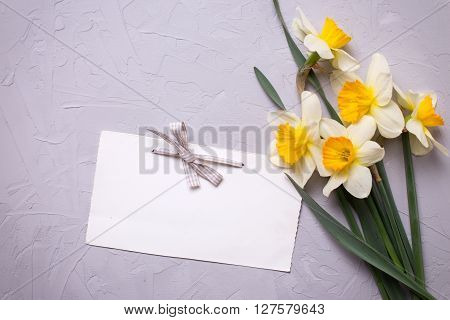 Fresh daffodils or narcissus flowers and empty tag for your text on textured grey background. Selective focus is on tag. Place for text.