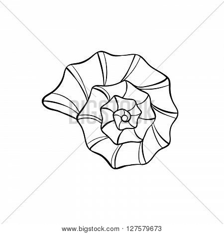 Hand drawn sea shell. Shellfish outline. Seashell icon in black isolated on white background.