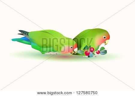 lovebirds agapornis fischeri . Two small parrots isolated on white background