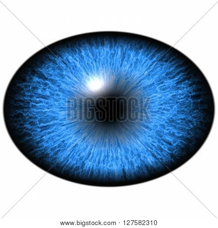 Elliptic eye, blue iris reflection in eye