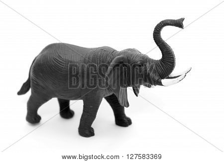 Elephant isolated on white background, black and white photo