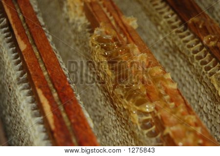 Honeycomb In Honey Frames