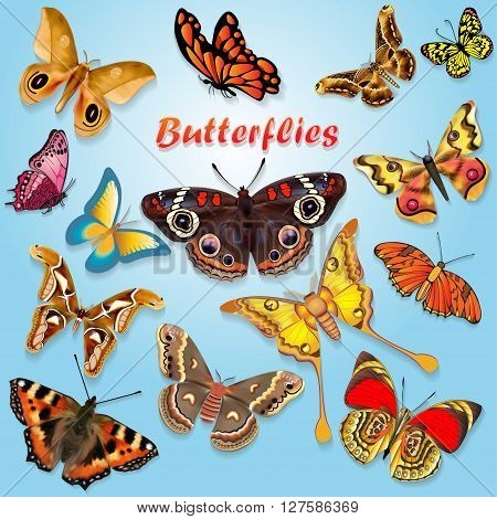colorful illustration of beautiful butterflies set of spring