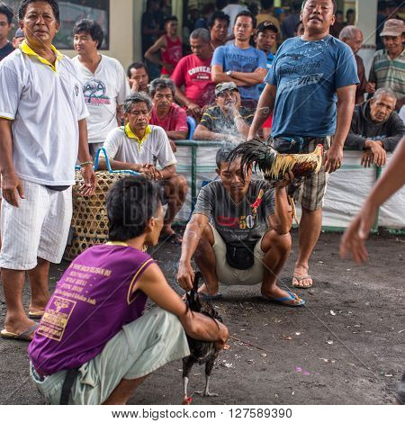 UBUD, BALI / INDONESIA - FEB 22, 2016: Unidentified local people during Balinese traditional cockfighting competition. Cockfights without a religious purpose are considered gambling in Indonesia