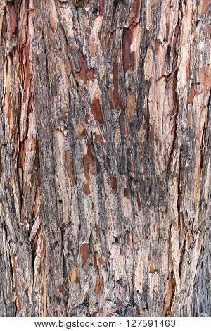 Abstract texture of the bark of a sequoia in close-up