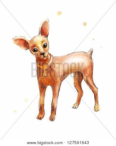 Puppy dog in watercolor. Toy Terrier drawing isolated on white background. Toy terrier in watercolor drawing by hand.