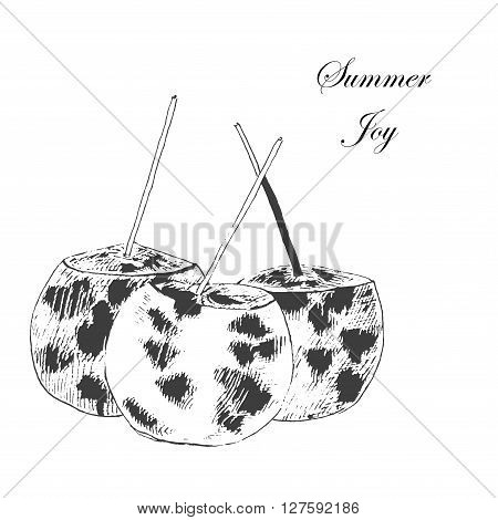 vector coconuts hand drawn sketch. vintage style detailed ink and pencil illustration