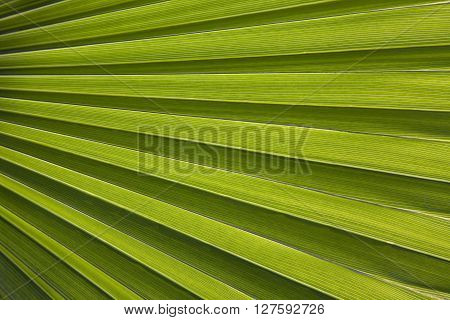 Close-up of palm leaf in back light