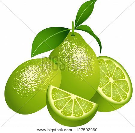 Scalable vectorial image representing a juicy green citrus fruit, isolated on white.