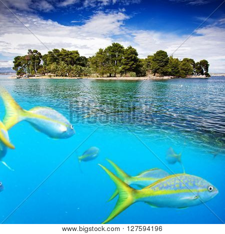 Underwater picture with fish and tropical island