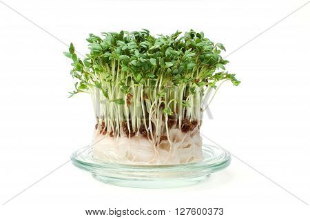 Fresh garden cress on a glass plate isolated on white
