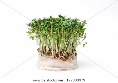 Fresh garden cress isolated on white background