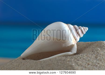 Macro shot of a sea snail on the beach in front of an azure sea and horizon
