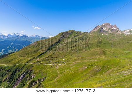 Panorama View Of The Alps At Grindelwald First