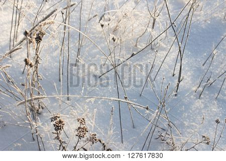 Beautiful winter landscape with snow