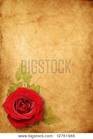 vintage rose , Old paper background