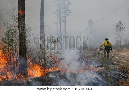 forestry service setting fire