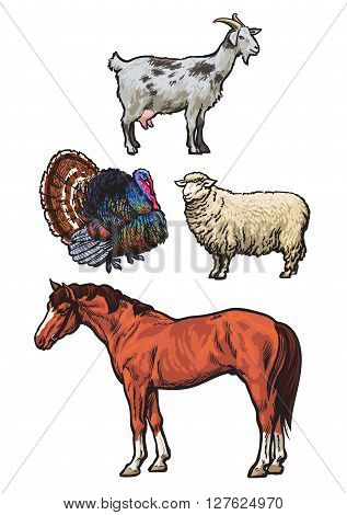 Farming, pets, set of cattle from a village, horse, goat, turkey, sheep, Set of colored animals isolated on a white background, animal sketch hand-drawn, realistic animal products for sale
