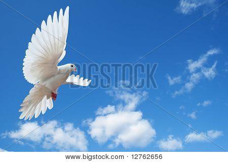 Paloma en el aire con las alas abiertas en frente del sol
