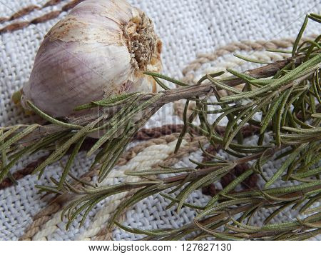 Fragrant whole garlic and rosemary sprigs green close-up